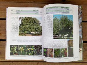 קטלוג עצים פינס